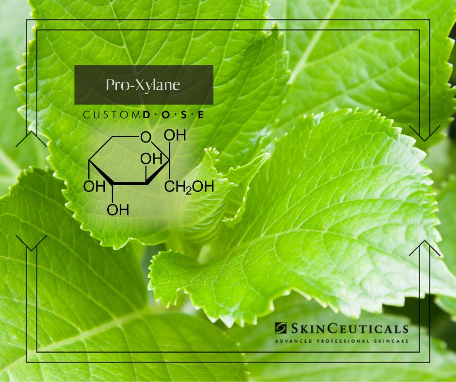 Image de feuilles de hêtre et de chimie verte pour l'ingrédient proxylane