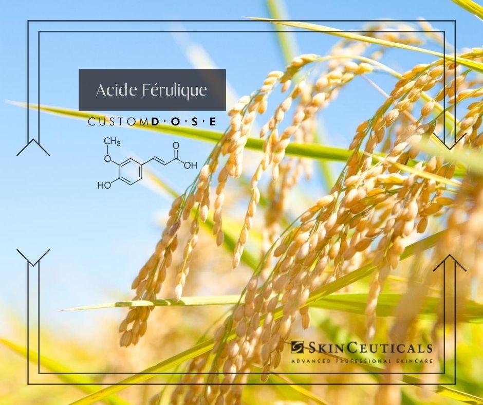 Image montrant un champ de blé pour rappeler la provenance de l'acide férulique.